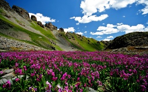 Wallpaper flowers, mountains, nature