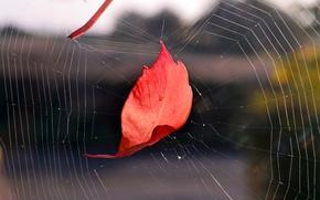 Picture autumn, sheet, web