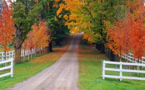 Picture road, autumn, forest, the fence, Nature