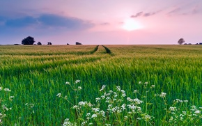 Picture field, summer, the sky, grass, clouds, flowers, nature, the evening