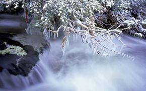 Picture ice, winter, branches, river, stream, Australia, Kosciuszko national Park