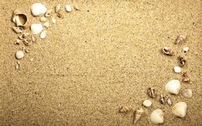 Picture beach, texture, sand, marine, seashells, sand seashells