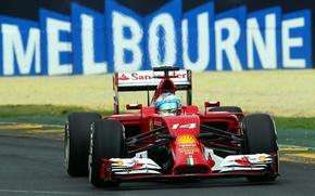 Picture Ferrari, Formula 1, Fernando Alonso, Alonso, F14T