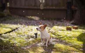 Picture each, dog, spring, garden