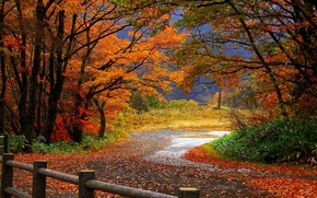 Picture road, forest, leaves, trees, the fence, Autumn, fence