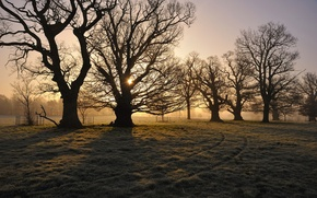 Picture field, trees, morning