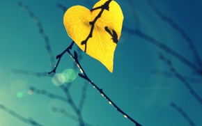 Picture the sky, light, sheet, branch, leaf, shadow, bokeh