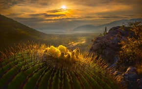Picture the sun, macro, cactus, valley, Mexico