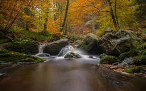 Picture autumn, forest, trees, river, stones