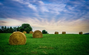 Picture field, the sky, grass, clouds, hay, farm