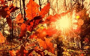 Picture autumn, the sun, rays, light, foliage, blur