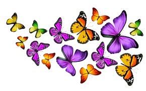 Wallpaper butterfly, colorful, colorful, butterflies