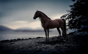Picture stones, animal, horse, horse, the evening