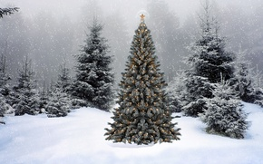Picture snow, new year, spruce, tree