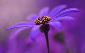 Picture flower, paint, petals, stem