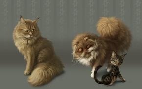 Picture cats, figure, fan
