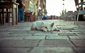 Wallpaper dog, street, loneliness
