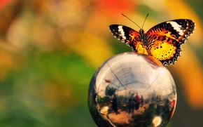 Picture color, ball, reflection, butterfly, brightness