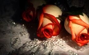 Picture flowers, roses, rhinestones, beautiful