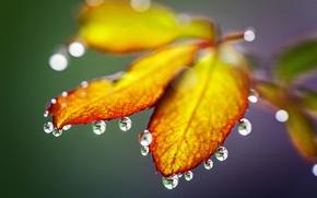 Picture autumn, leaves, drops, nature, rain, rain, nature, autumn, leaves, drops