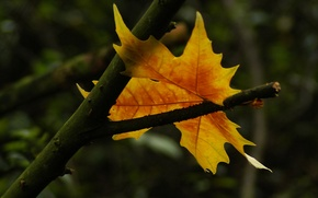 Picture sheet, autumn, symbol