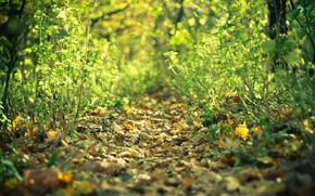 Picture autumn, forest, leaves, Trail