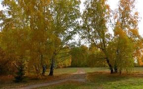 Picture road, autumn, forest, Siberia, Birch