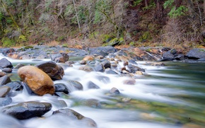 Picture forest, river, stones, stream