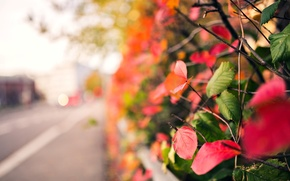Picture autumn, leaves, macro, branches, red, green, background, tree, pink, widescreen, Wallpaper, blur, wallpaper, leaves, widescreen, …