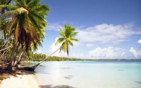 Picture beach, tropics, palm trees, the ocean, island, exotic, Tuamotu