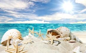 Picture sand, sea, beach, the sun, stars, shell, summer, sunshine, beach, sea, sand, seashells, starfishes