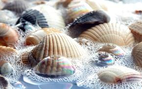 Wallpaper foam, water, shell