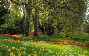 Wallpaper grass, trees, flowers, glade, Spring, tulips, alley
