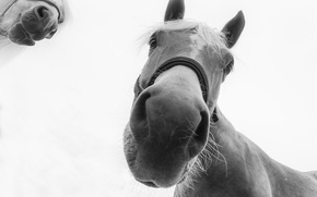 Picture background, horses, muzzle