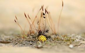 Wallpaper treatment, Ladybug, plant