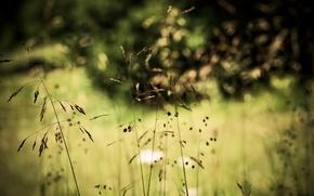 Wallpaper bokeh, nature, grass, plants