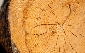 Picture forest, tree, texture, forest, wood, texture, slice, furniture
