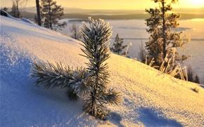 Picture snow, trees, winter, snow, sun, winter day, sunlight