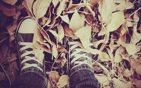 Picture autumn, leaves, sneakers, laces
