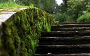 Picture macro, moss, stage