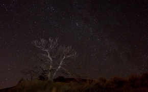 Picture space, stars, night, space, tree, desert
