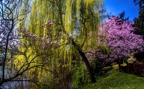 Wallpaper grass, trees, pond, spring, garden, blooming