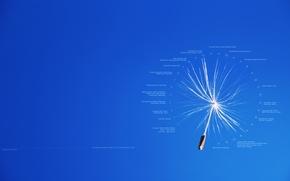 Picture text, labels, creative, dandelion, fluff, flight, calendar, date, events, achene