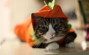 Wallpaper cat, cat, junkie, Tomcat grey, cunning cat