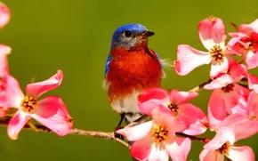 Wallpaper spring, beak, flowers, bird