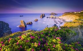 Picture sea, summer, flowers, rocks