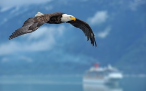 Picture the sky, background, eagle, ship, wings, sky, wings, background, eagle, ship