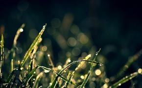 Wallpaper wallpapers, background, plants, Wallpaper, bokeh, glare, grass, drops