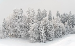 Picture winter, snow, trees, landscape