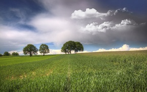 Picture field, the sky, clouds, trees
